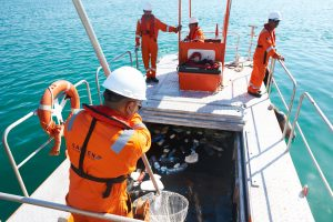 Abu Dhabi Ports collects over 120 tons of floating sea debris